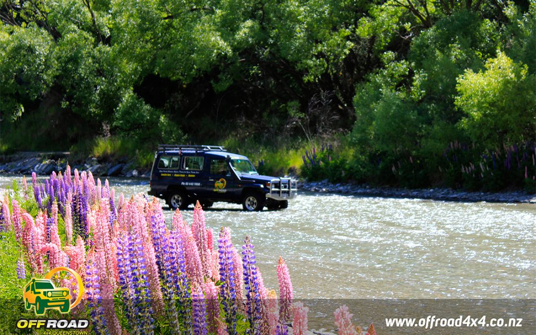 Queenstown Wine Tours