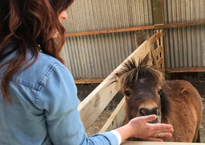 Glenorchy Farm Experience
